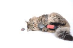Kitting jouant avec le balai Image stock