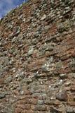 Kittiwake, Rissa tridactyla. Colony at Dunbar, Dunbar, UK royalty free stock image