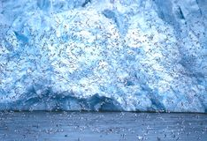 Kittiwakes al ghiacciaio della Monaco, Svalbard Fotografia Stock