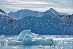 Kittiwakes at Monaco Glacier in Svalbard Stock Photo