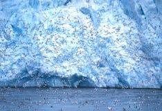 Kittiwakes na geleira de Monaco, Svalbard Fotografia de Stock
