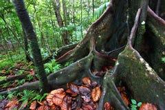 kitts luksusowy tropikalny las deszczowy święty Zdjęcia Stock