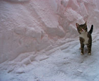 Kitty's first meow through the snow. A cute cat playing in the snow Royalty Free Stock Images