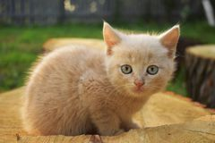 Kitty è un sole poco lanuginoso immagini stock libere da diritti