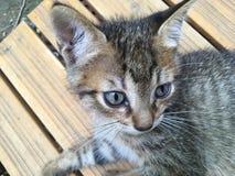 kitty Royalty-vrije Stock Foto