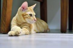 kitty lizenzfreie stockbilder