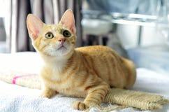 kitty stockbilder