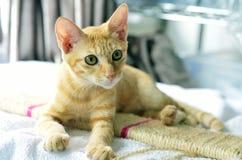 kitty lizenzfreies stockbild