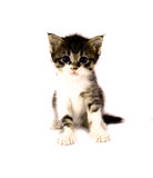 Kitty. Small cat isolated on white background Royalty Free Stock Photography