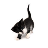 Kitty. Small cat isolated on white background Stock Photos