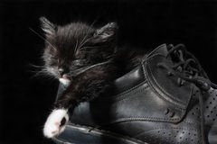 Kitty. The black kitten sleeps in a black boot Royalty Free Stock Images