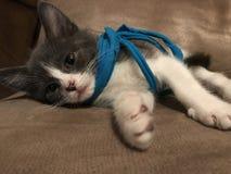 kitty immagine stock libera da diritti