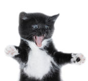 Kitty. The black kitten on white background Royalty Free Stock Photos