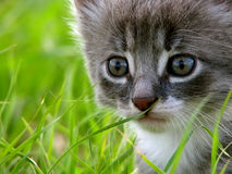 Kitty. Sitting on the grass in the garden Stock Images