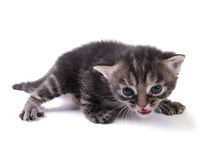Kitty Stock Images
