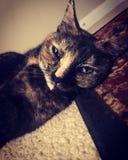 kitty fotografia stock