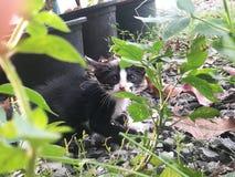 kitty stockfotografie