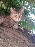 Kitty1 foto de stock