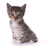 Kitty. On the white isolated background Stock Photo