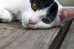 Kitty Stock Image