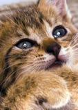 Kitty Stock Photos