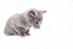 Kitty. Sweet kitty looking down isolated Stock Photos