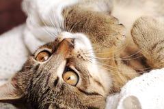 Kitty Fotos de archivo