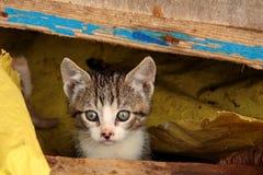 Kitty Foto de archivo libre de regalías