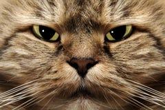 Kitty Stock Photo