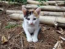 kitty imagens de stock