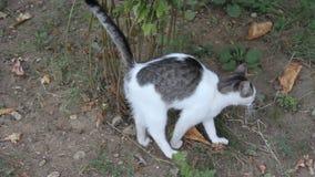 kitty stock footage