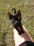 kitty lizenzfreie stockfotos