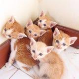 kitty Fotografia Stock Libera da Diritti