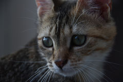 kitty Image stock
