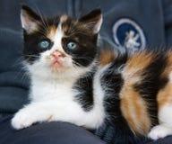 Kitty royalty free stock photo