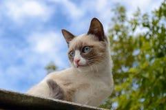 kitty Immagini Stock Libere da Diritti