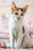 kitty Royalty-vrije Stock Foto's