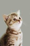 Kitty Image libre de droits