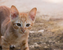 kitty Fotos de Stock Royalty Free