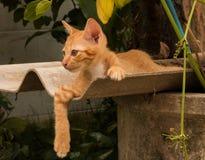 kitty Foto de Stock