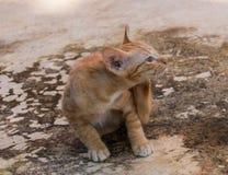kitty Imagens de Stock Royalty Free