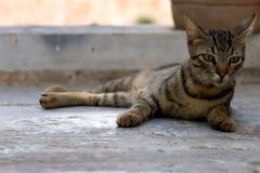 kitty obraz royalty free