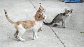 kitty Royalty-vrije Stock Afbeelding