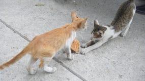 kitty Stock Afbeeldingen