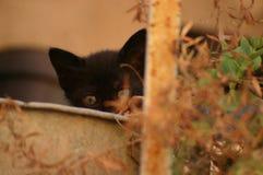 kitty Imagem de Stock