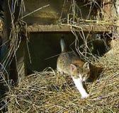 kitty photo libre de droits