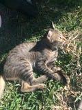 kitty Immagine Stock