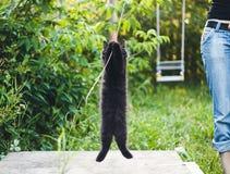 kitty Stock Fotografie