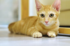 kitty lizenzfreie stockfotografie