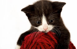 Kitty And Yarn Royalty Free Stock Photography